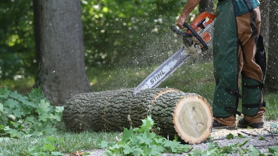 Sourcing your own wood