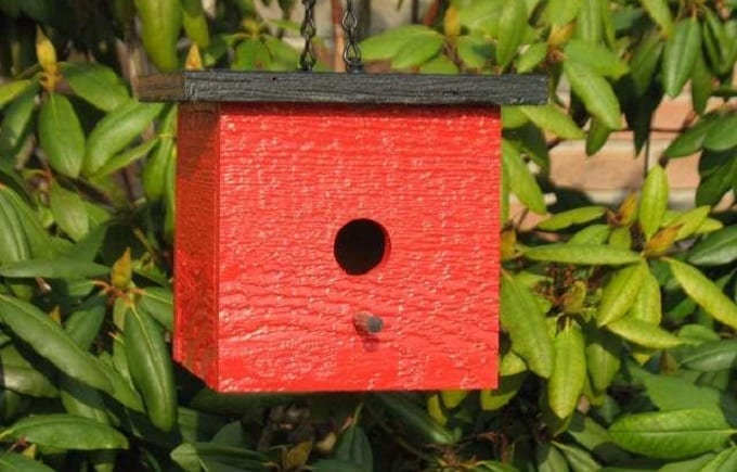 DIY Birdhouse With Feeder